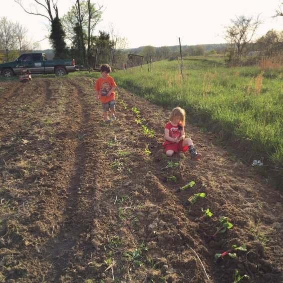forgotten-foods-farm-hill-5
